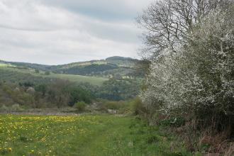 Wyeswood Common