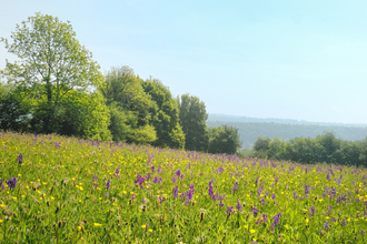 Pentwyn Farm flower meadow