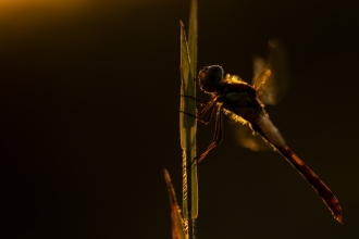 Golden Dragonfly our Over 16s Photography Competition winner 2019